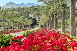 Mallorca trifft Sylt – kulinarisch