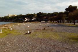 Das Grundstück mit den vernichteten Jungbäumen bei Portocolom befindet sich am sogenannten Corso-Ufer.