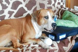 Hunde eines toten Deutschen aus Tierheim gestohlen