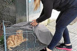 Michaela Prollius hat eine Katze zur Untersuchung eingefangen.