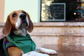 Mieterkündigung wegen Hundehaltung rechtens