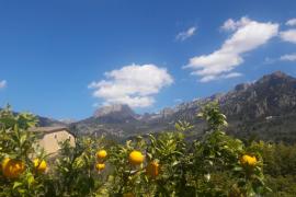 Der Frühsommer kommt mit viel Sonne nach Mallorca