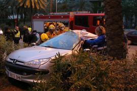 In Palma de Mallorca gegen Palme geprallt