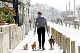 Palma verschärft Hundekot-Verordnung drastisch