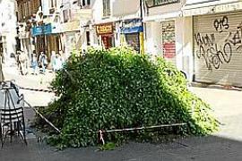 Carrer Oms hat jetzt noch einen Baum weniger