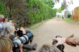 Auf den richtigen Moment kommt es an: Die Teilnehmer des Workshops fotografieren einen Araber-Schimmel.