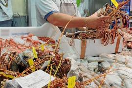 Mallorca-Fischer fangen mehr Langusten als üblich