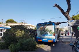 Kiefer fällt auf Bus in Can Pastilla