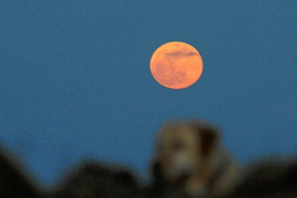 Am Freitag findet die längste Sonnenfinsternis des 21. Jahrhunderts statt. Der Rote Planet lässt sich gleichzeitig aus so gering