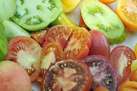 Tomaten kommen auf Mallorca in einer großen Farben- und Formenvielfalt auf den Teller.