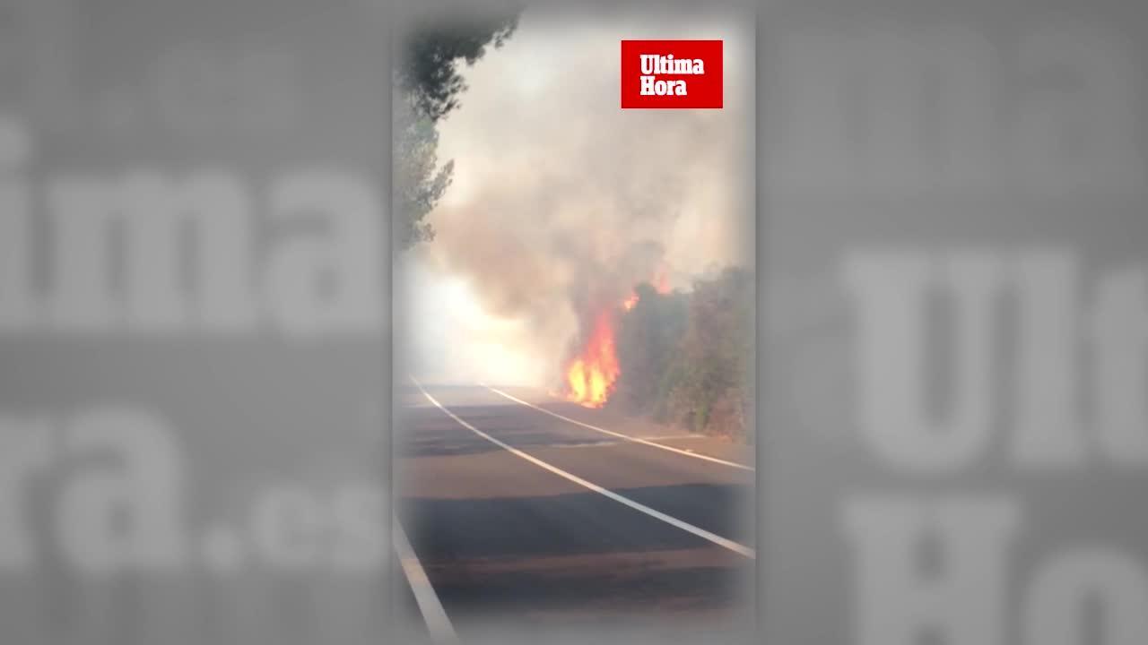 Löschflugzeuge bekämpfen Waldbrand im Insel-Osten