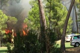 Feuer in Waldareal des Golfplatzes von Son Servera