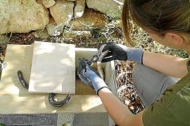 Behörden sagen Schlangen auf Mallorca den Kampf an