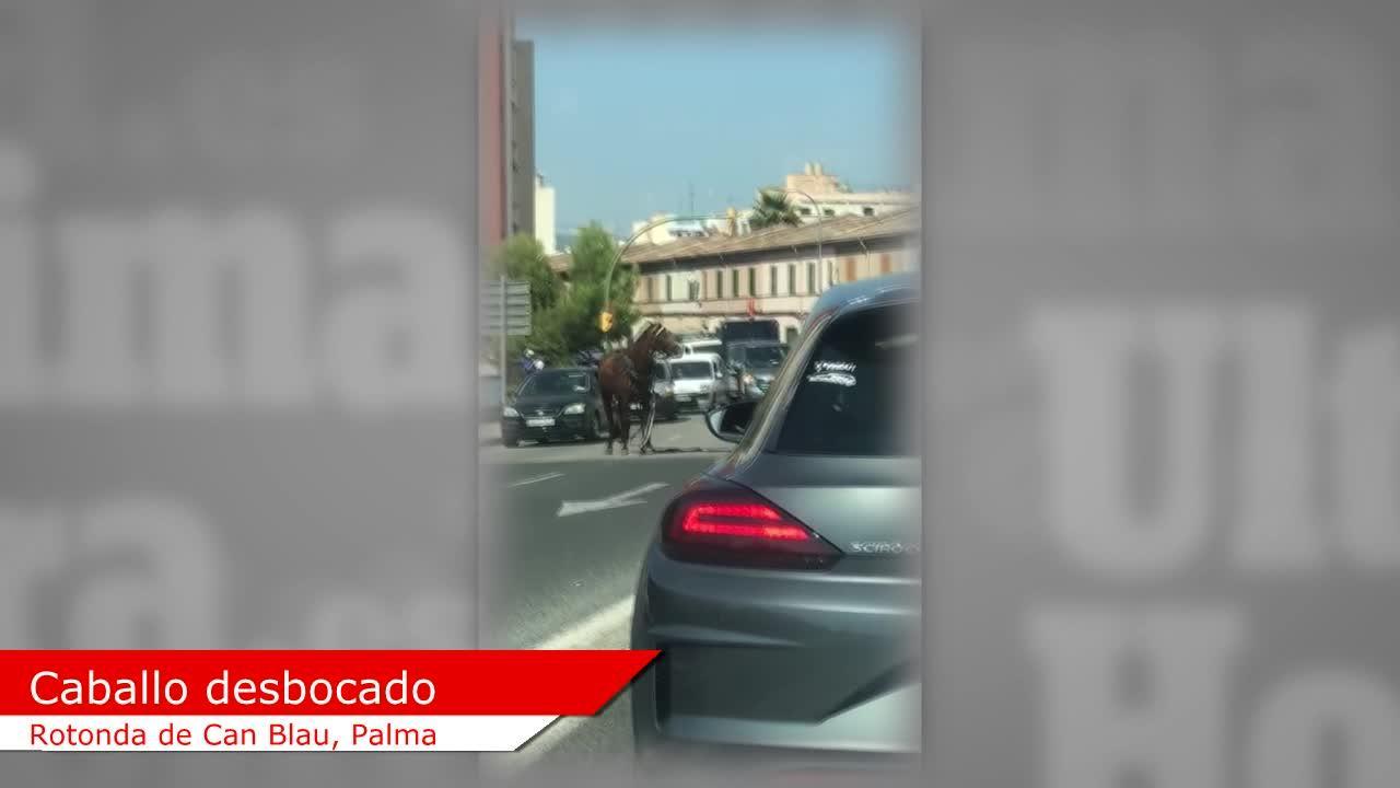 Durchgegangenes Pferd reißt Kutsche auf Mallorca um