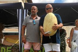 22,55 Kilo: Vilafranca prämiert dickste Melone aller Zeiten