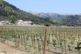 Die Finca Gabellí Gran bei Campanet auf Mallorca.