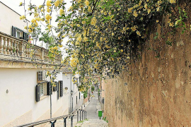 Die Stufen an der Carrer Lanuza sind auch von Unsportlicheren zu schaffen und punkten zusätzlich mit Blütenranken.