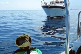 4400 Seegras-Ankerer bei Kontrollen erwischt