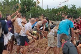 1500 Menschen nehmen an Traubenschlacht teil