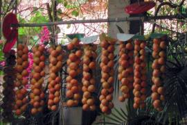 Ramellet-Tomate ist jetzt ganz offiziell traditionelle Spezialität