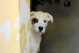 Allein im Tierheim von Son Reus in Palma warten zurzeit 130 Tiere auf einen neuen Besitzer.