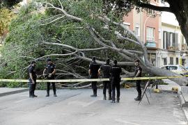 Baum stürzt auf bekannten Markt in Palma
