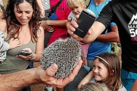 80 Tiere im Naturpark Mondragó freigelassen