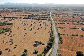 """Neue Autobahn auf Mallorca """"mit aller Macht verhindern"""""""