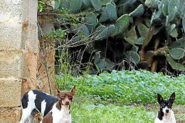Die Hunde gibt es in unterschiedlichen Farbkombinationen.
