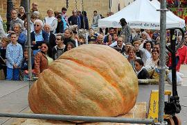 In Muro werden im November alljährlich die gewaltigsten Gemüse-Giganten gekürt.