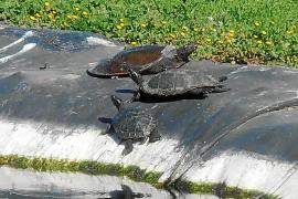 Aktionen gegen wilde Tiere auf Balearen-Campus