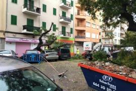 Sturmschäden in der Nacht zum Mittwoch auf Mallorca: Hier in der Ricardo-Ortega-Straße.
