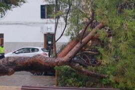 Sturmschäden in der Nacht zum Mittwoch auf Mallorca: Hier im Santa-Catalina-Viertel.