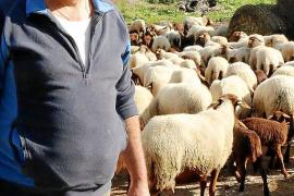 Antoni Seguí Llompart liebt seine Schafe und ist Käsemacher aus Leidenschaft.