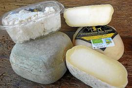 Öko-Käse von roten Inselschafen