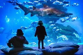 Carlos Ramón schickte ein Bild aus dem Aquarium.