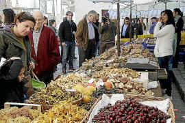 In Mancor de la Vall findet Ende November alljährlich eine Pilz-Fira statt.