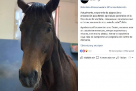 Ein Pferd aus Deutschland für Palmas Polizei