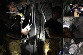 Feuerwehr rettet Hund aus Brunnenschacht