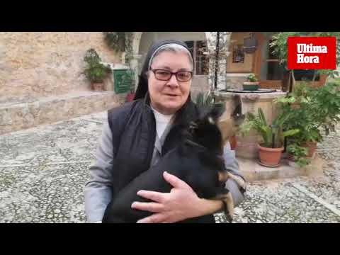 Der Hund, der mit den Nonnen singt