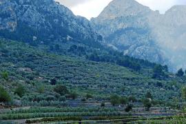 Tramuntana-Gebirge ist jetzt eine Marke