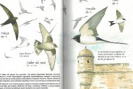 Leitfaden für alle, die sich für Vögel interessieren