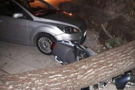 Sturm richtet Schäden auf Mallorca an