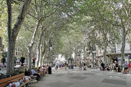 Andere Baumarten für Palmas Stadtbild