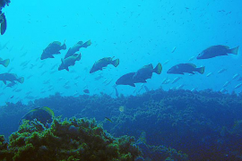 Fischpopulation im Llevant-Park bei Cala Rajada riesig