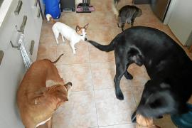 Tierschützer laufen Sturm gegen neue Verordnung