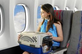 Mit Hund und Katze nach Mallorca fliegen - So geht's