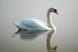Auf Mallorca sind viele seltene Vögel unterwegs