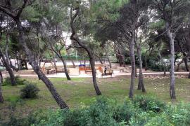 Palma hübscht seine Grünflächen auf