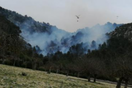 Waldbrand auf mehreren Hektar im Tramuntana-Gebirge